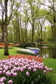 keukenhof flower gardens 68 best keukenhof images on pinterest nature botanical gardens