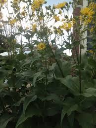 shade tolerant native plants native plant gallery jessecology