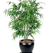 indoor plants that need no light low light indoor plants indoor plants that do not need sunlight for