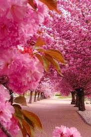 trees with pink flowers best 25 pink trees ideas on pink blossom pink nature