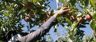 uatre nueva escala salarial para los trabajadores agrarios infoco fijaron la escala salarial mínima para trabajadores
