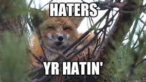 Fox Meme - the cadre the best of the upei fox meme