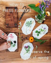 how to press flowers step by step tutorial pistils nursery