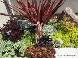 where to start with the succulent garden ideas garden ideas