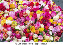 colored roses big bouquet of multi colored roses picture search photo