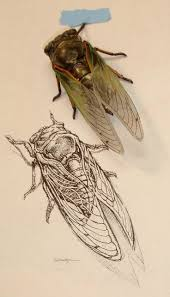 672 best insects in art images on pinterest insect art beetles