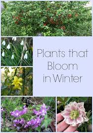 best 25 winter plants ideas on pinterest indoor air quality