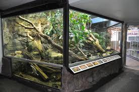 rainforest terrarium zoochat