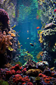 best 25 coral reefs ideas on pinterest coral underwater life