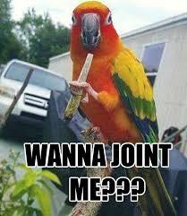 Parrot Meme - just a cool parrot memes lol