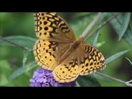 Outdoor Wedding Venues Ma The Butterfly Place Weddings Get Prices For Wedding Venues In Ma