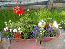 Flower Delivery Edina Mn - red white and blue flowers for your fourth of july kremp