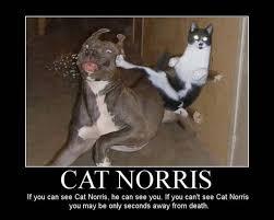 The Best Cat Memes - i can haz best funny cat memes pressroomvip part 30