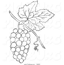 grapes clipart coloring page pencil and in color grapes clipart