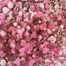 Bulk Baby S Breath Pink Enhanced Baby U0027s Breath