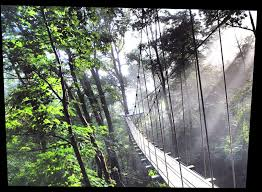 Backyard Zip Line Without Trees by The Gorge Zip Line Thrilling Zipline Canopy Adventure U2022 Asheville