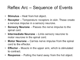 Motor Reflex Arc Nervous Control Simplest Type Of Response Controlled By The