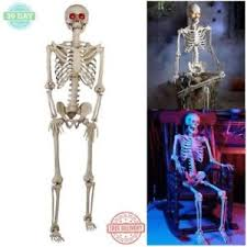 halloween skeleton fully assembled 5 ft life size prop decoration