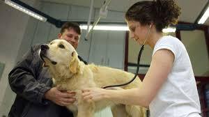 Tierarzt Bad Wildungen Giftköder Bereits Acht Hunde Im Landkreis Kassel Vergiftet Hunde