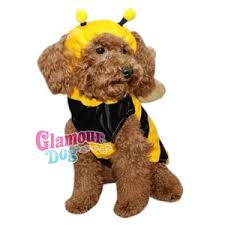 Pet Halloween Costumes Dogs 118 Dog Halloween Costumes Images Animals Dog