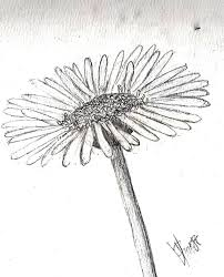 rough daisy sketch by poeticperfectionist on deviantart