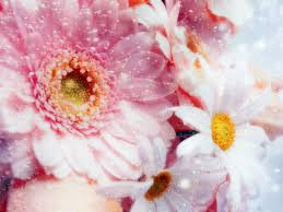 Flower Wallpaper Pink Flower Wallpaper Flowers Nature Wallpapers For Free Download