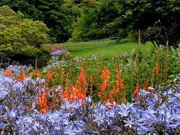 16 best kirstenbosch the national botanical garden images on