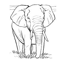 99 ideas elephant picture colour emergingartspdx