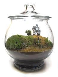 divine terrarium ideas come with clear glass terrarium media