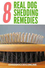 Do Newfoundlands Shed Year Round by Best 25 Dog Shedding Remedies Ideas On Pinterest Dog Shedding