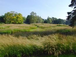 594 best grasses images on landscaping ornamental