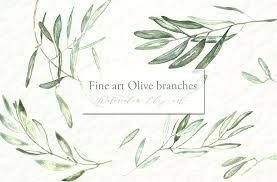 olive branches watercolor clipart illustrations creative market