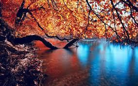 Autumn Flower 35 Most Stunning Autumn Wallpapers