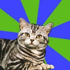 Cat Meme Generator - introvert cat meme generator