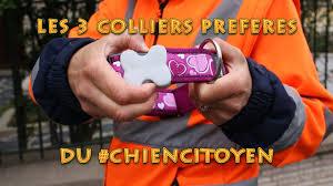 Quelle Chien Me Correspond by Quel Collier Choisir Pour Mon Chien Youtube