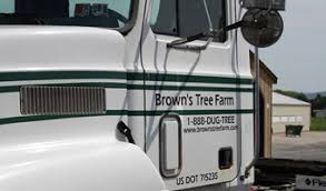 wholesale trees evergreen services brown s tree farm