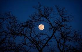 wallpaper of the week moon through bare trees gizmo s freeware