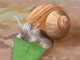 how to feed a land snail 8 steps with pictures wikihow