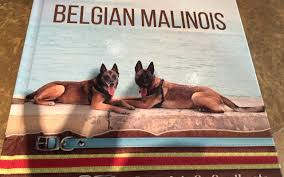 belgian malinois size at 6 months malinois author at malinois usa