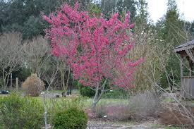 All Year Flowering Shrubs - shrubs newsletters