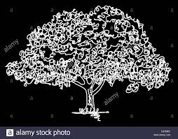 Oak Tree Drawing Continuous Line Drawing Of An Oak Tree Stock Photo Royalty Free