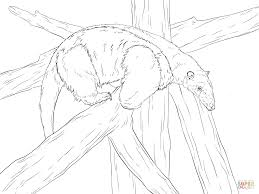 southern tamandua coloring page free printable coloring pages
