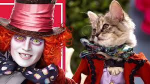 cute cats and kittens in alice costumes and wigs disney video