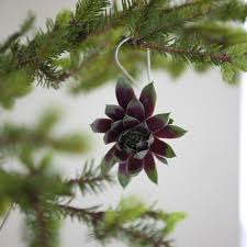 succulents used as tree ornaments and when christmas is over they