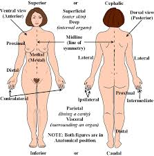 human body archives page 6 of 60 human anatomy chart