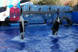 Seaworld Orlando Park Map by File Seaworld Orlando Shamu 1553 Jpg Wikimedia Commons