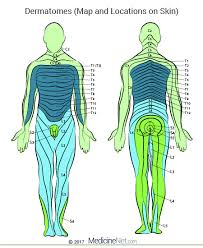 Nerves In The Knee Anatomy Cervical U0026 Lumbar Dermatomes Map Of Upper Lower Body Leg Limbs