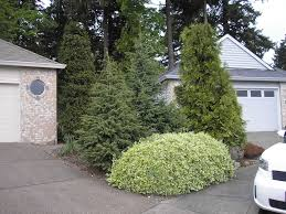 landscaping vancouver wa landscape installation vancouver wa pruning and landscaping