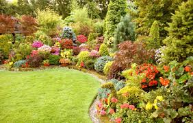 plant special plants stunning perennial flowers 5 stunning and