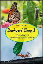 best 25 potato bugs ideas on pinterest bugs home insects and